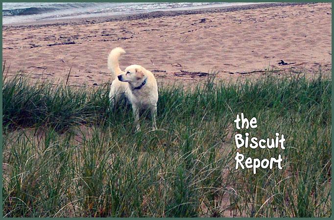 Biscuit6-25-17