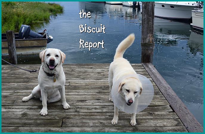 Biscuit6-26-16