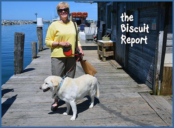 Biscuit7-15-17