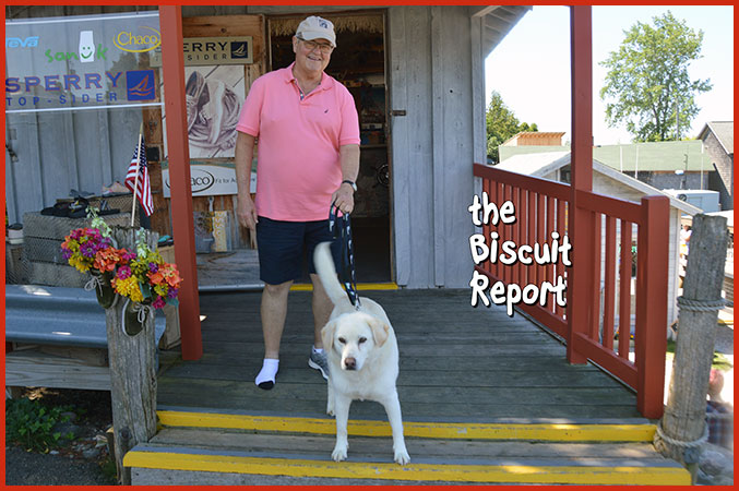 Biscuit7-29-17