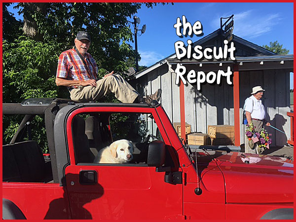 Biscuit7-30-17