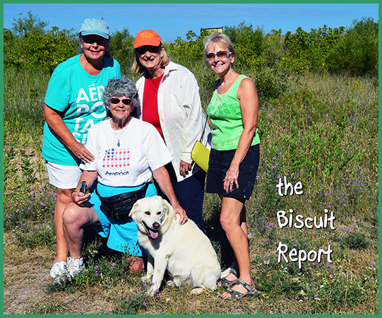 Biscuit8-1-16