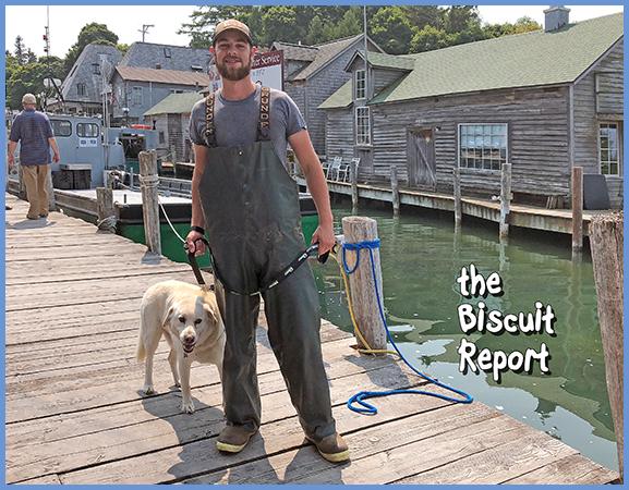 Biscuit8-12-18