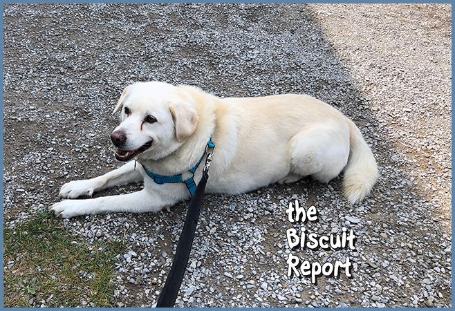 Biscuit8-26-18