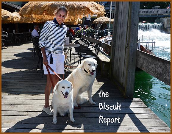Biscuit8-31-16