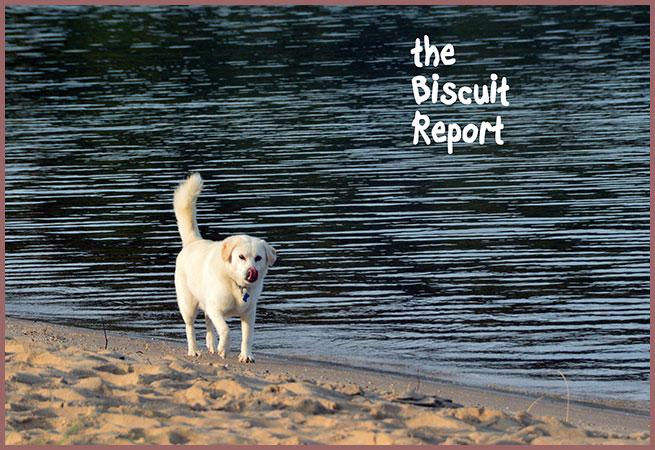 Biscuit8-31-17