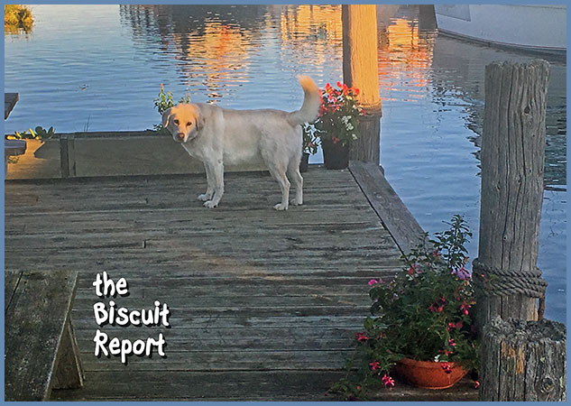 Biscuit9-18-17
