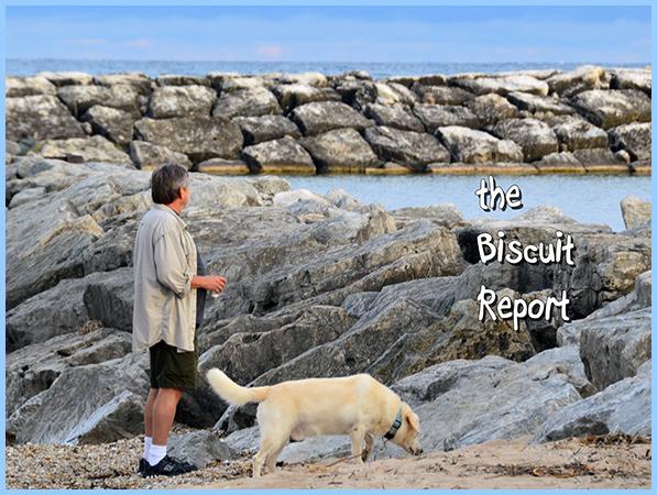 Biscuit9-23-16