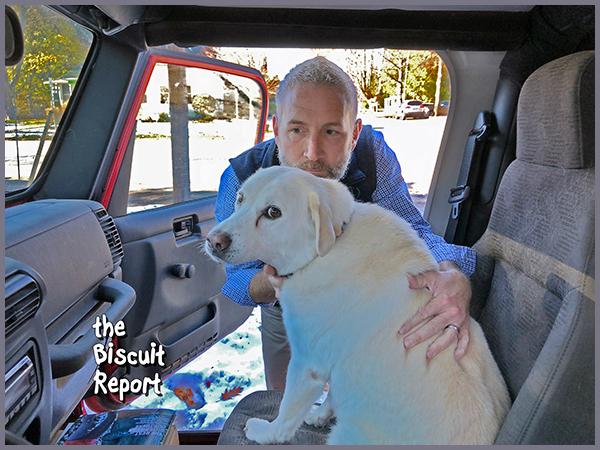 Biscuit 11-15-2018