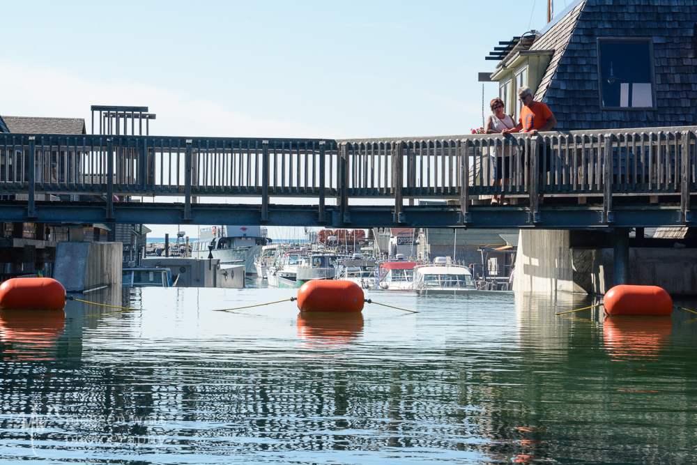 Bridge-3269