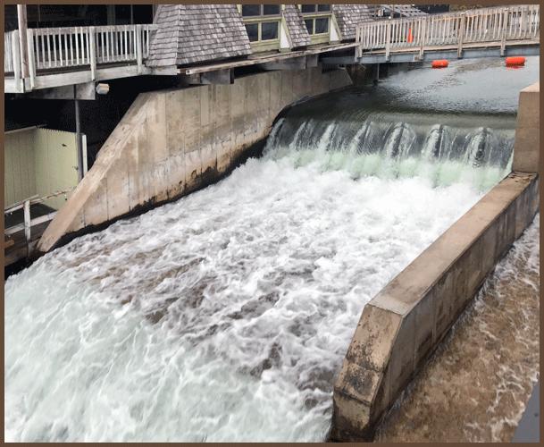 Dam11-8-18