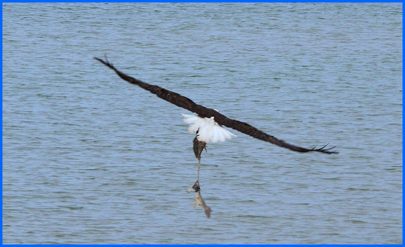Eagle5-14-17