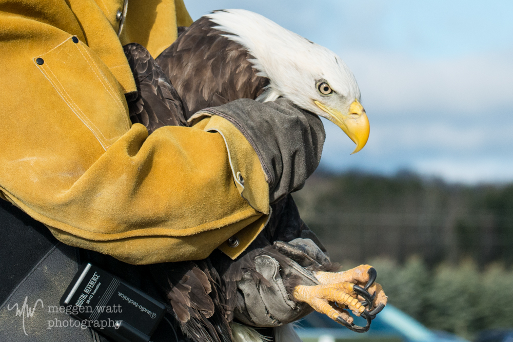 Eagle Miracle Boy Release-8915