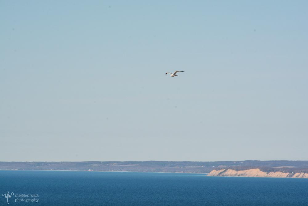 Gull Shoreline-2713