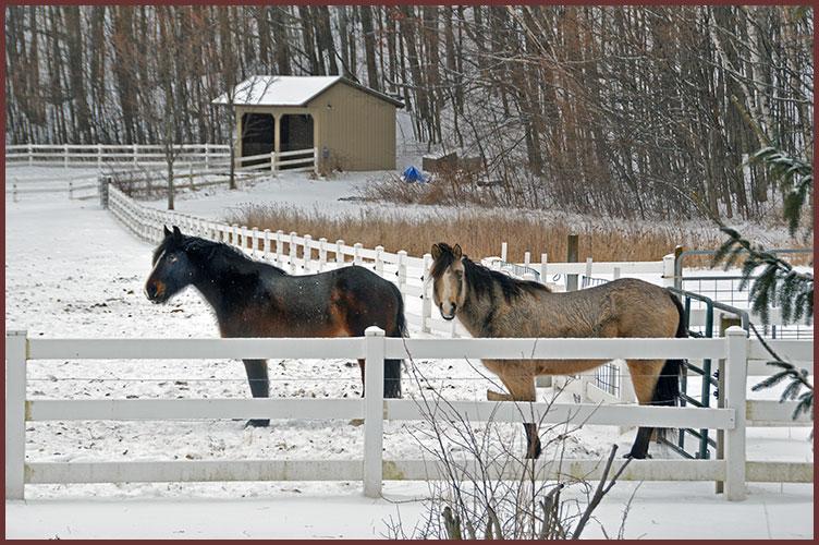 Horse2-25-17
