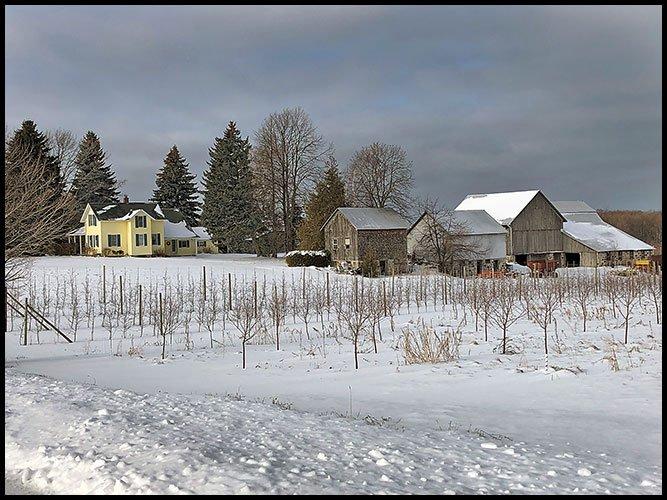 Kolarickfarm1-12-2020