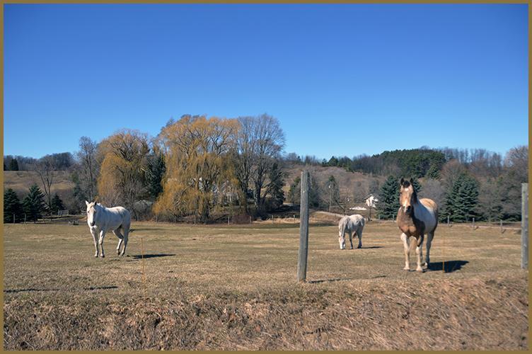 Ranch3-19-16