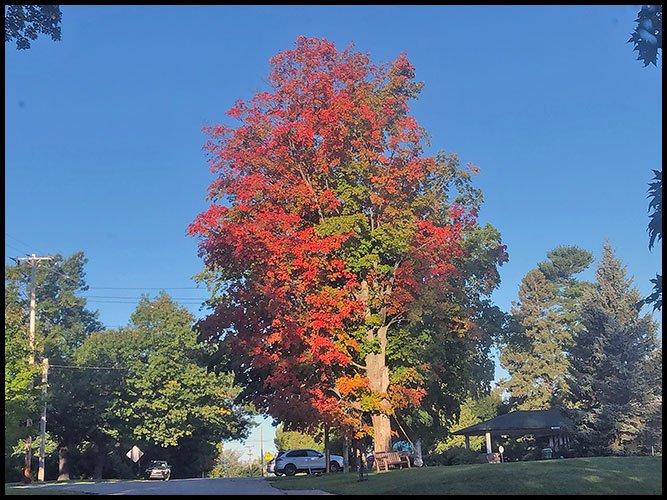 Redtree9-19-20