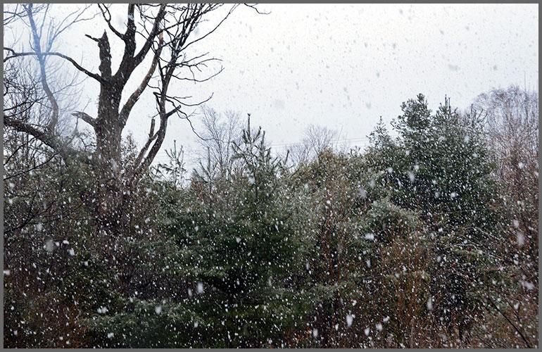 Snowflakes1-25-17