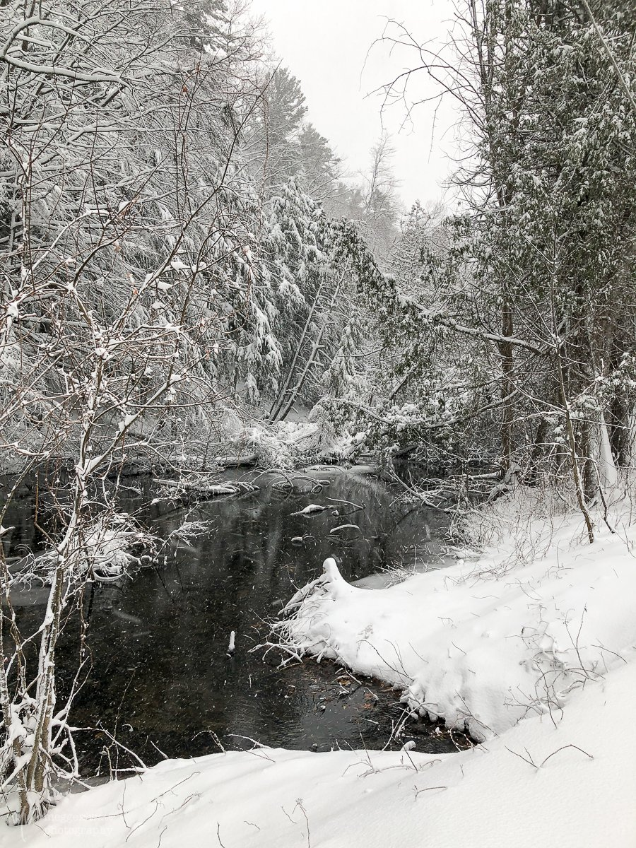 Snowy Woods-5647
