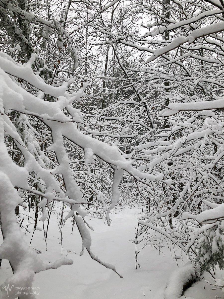 Snowy Woods-5648