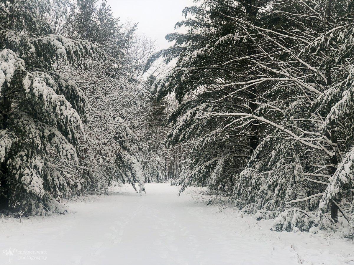 Snowy Woods-5658
