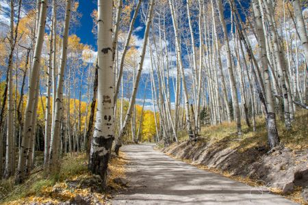 Aspens on Last Dollar Rd