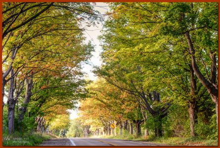 TLR-20161003-5197-tree Tunnel M22