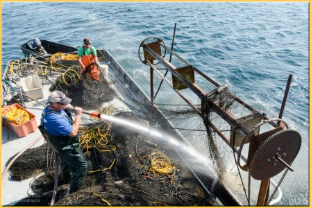 TLR-20170925-pulling Nets-1267