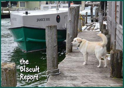 Biscuit12-19-17