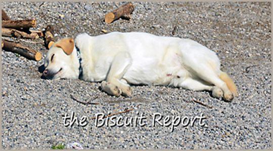Biscuit4-28-18