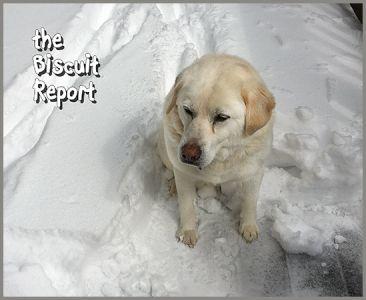 Biscuit4-4-18