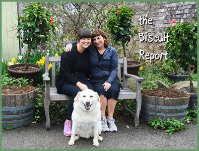 Biscuit5-12-16