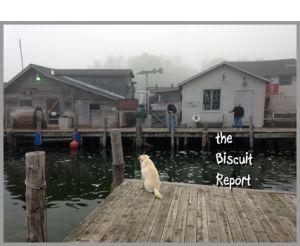 Biscuit6-15-15 1
