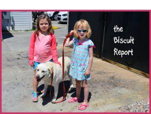 Biscuit6-23-15