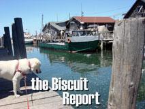 Biscuit6-26-09