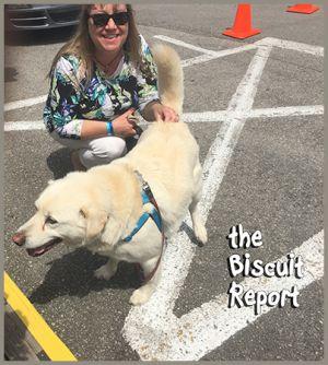 Biscuit6-9-18
