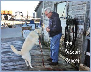 Biscuit9-21-2015