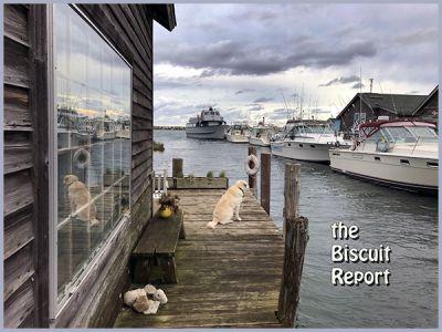 Biscuit9-28-18