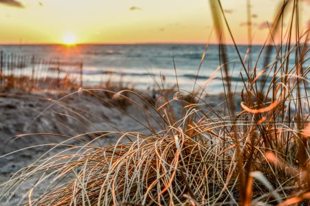 Leland Sunset Dune Grass-5333