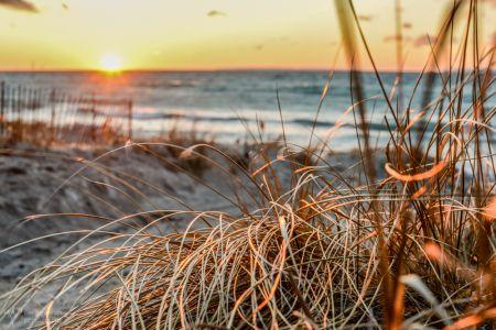 Leland Sunset Dune Grass-5333
