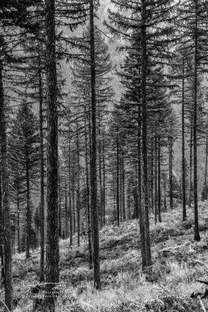 Trees JB94161-Edit