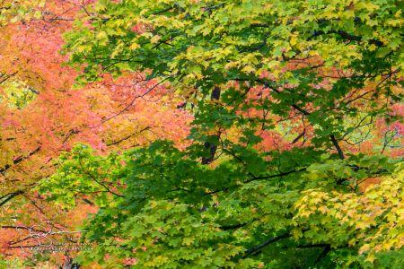 Trees JB94834
