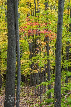 Trees JB94928