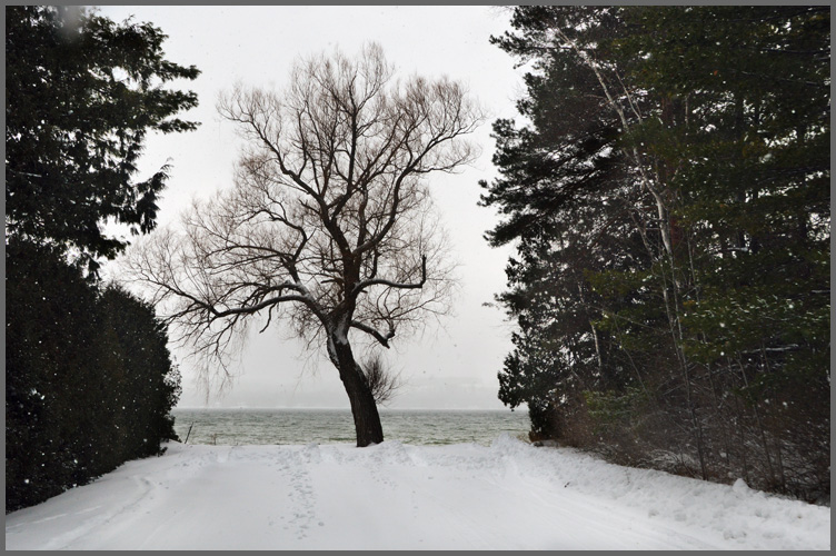 Tree1-13-16