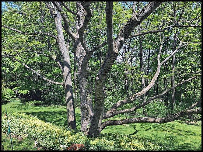 Tree5-29-20