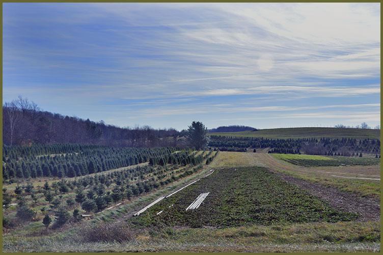 Treefarm11-26-17