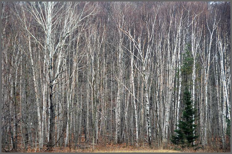Trees2-23-17