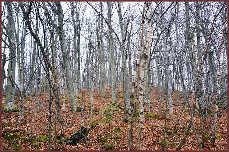 Trees2-23-17a