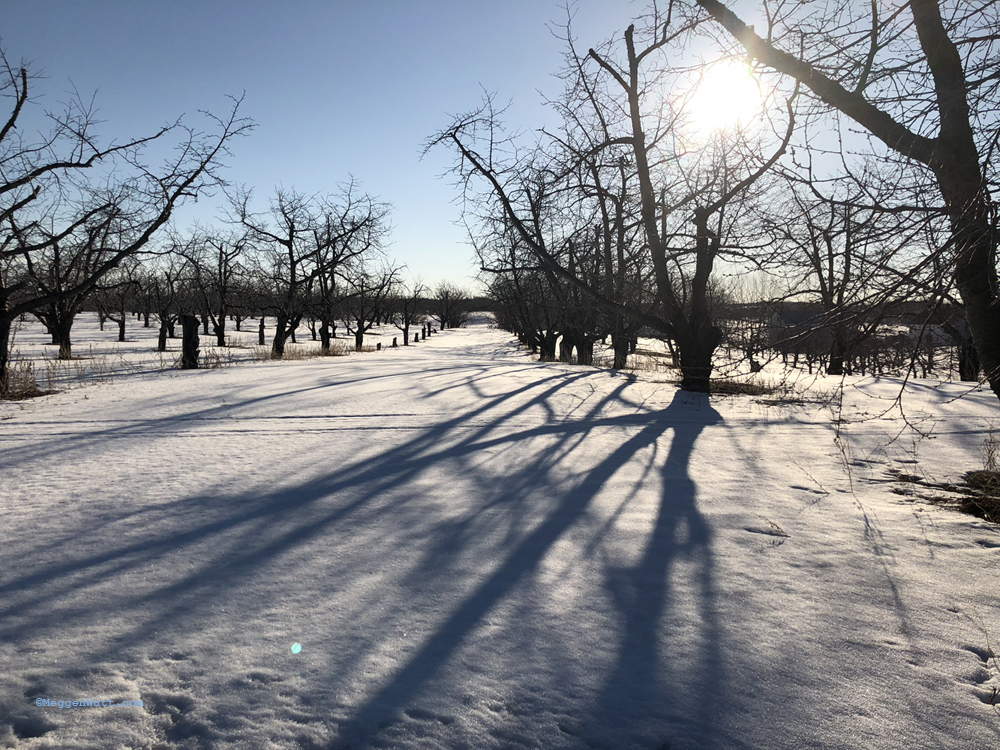 Trees Snow IMG 0398